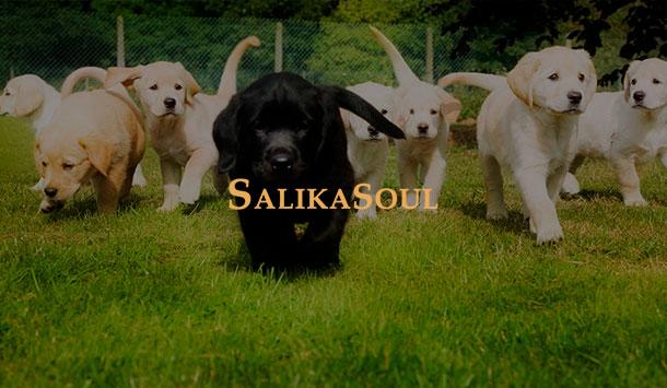 salika_preview